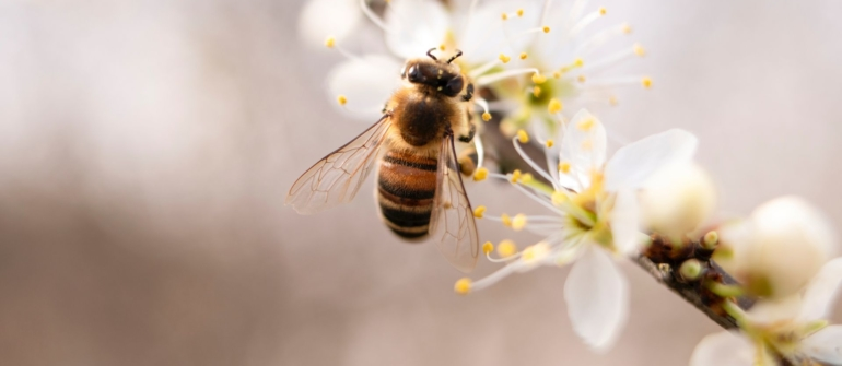 Prijave za tečaj za pčelare